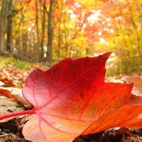 Why Autumn (Fall) is my Favourite Season